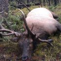 3 Reasons to Plan a Hunting Trip in Colorado